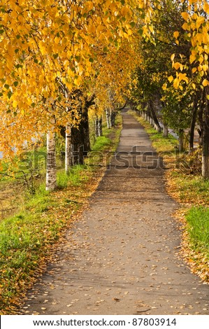 Birch avenue in the autumn. The top view. - stock photo