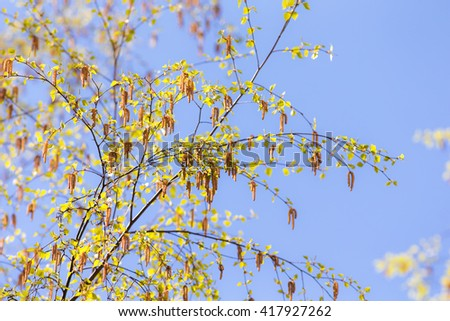 birch branches with buds on sky background - stock photo