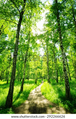 Birch forest on a sunny day. Green woods in summer. Spring landscape.  - stock photo