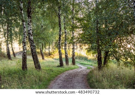 birch grove at dawn