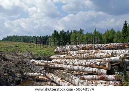Birch Logs at Forest Clearcut - stock photo