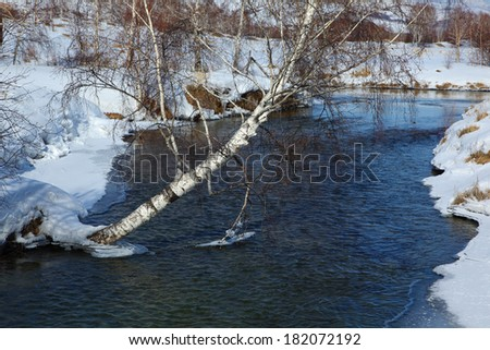 birch near river at march - stock photo