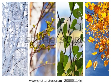 Birch tree and foliage at different times of the year. Floral backgrounds. Four seasons. Collage