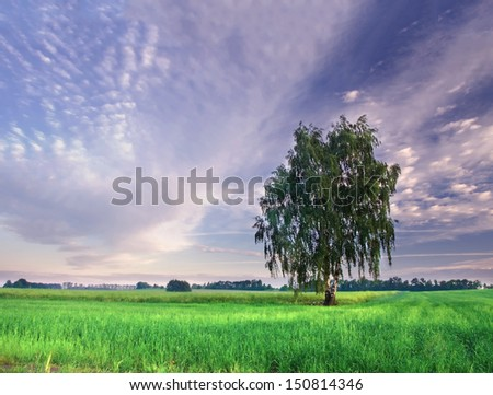 birch tree and sky at sunrise