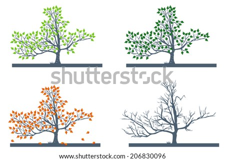 Birch tree in different seasons with detailed leaves