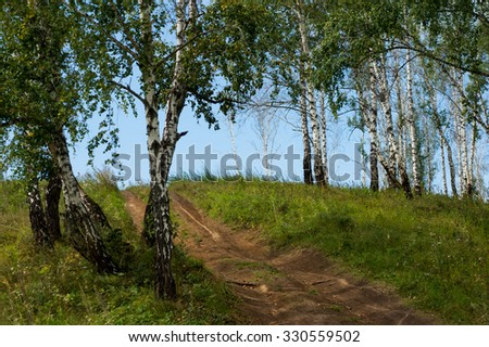 birch trees grow on top of the hill. landscape