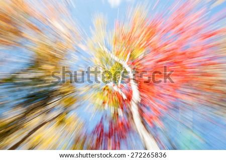Birch trees in fall, Maine, Vibrant nature abstract in zoom blur, viewing the amazing New England forest canopy from below in fall. - stock photo