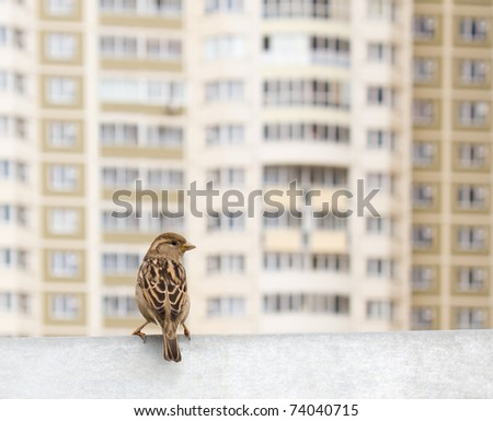 bird and new house - stock photo