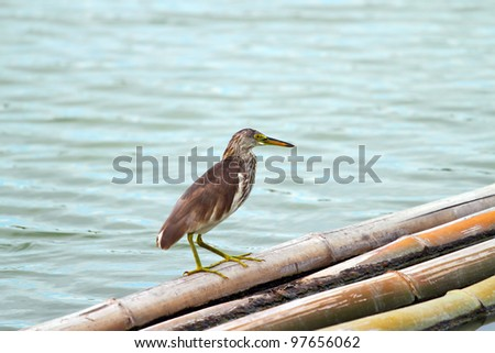 Bird and The Lake - stock photo
