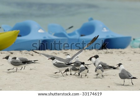 Bird and watercrafts on the beach