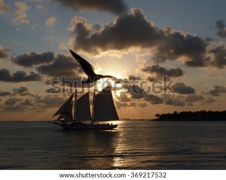Bird at Sunset, Key West, USA. - stock photo