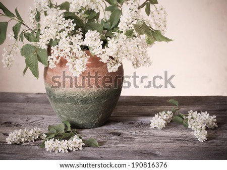 Bird cherry branch in vase on a  wooden table - stock photo