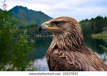bird eagle on a background of mountains and forests - stock photo