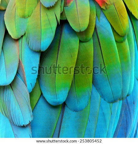 Bird feather, beautiful pattern background texture made from Greenwinged Macaw. - stock photo
