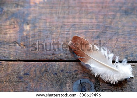 Bird feather on old wooden board with free space for text - stock photo