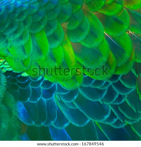 Bird feather texture for background - stock photo
