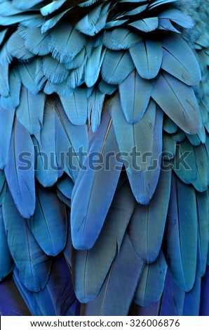 Bird feathers, Blue and Gold Macaw feathers. - stock photo