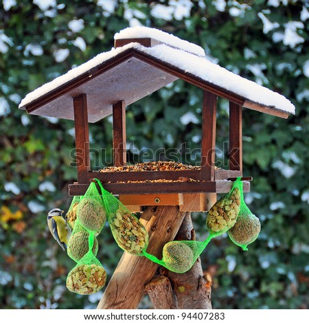 Bird feeder with eating blue tit