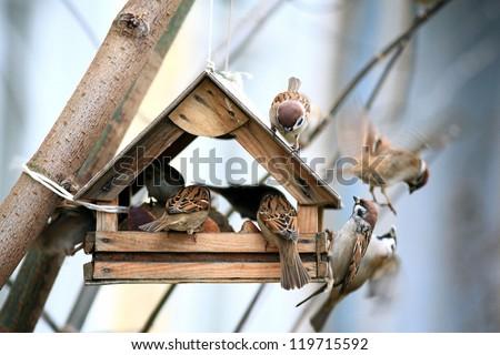 bird feeders. tree house for the birds, cheerful apartment - stock photo