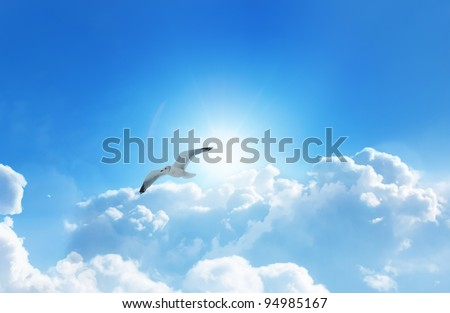 Bird Flying above clouds on a fresh summers day - stock photo
