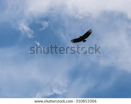 Bird flying at the sky - stock photo