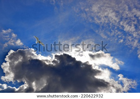 Bird flying in the blue sky. Sunshine rays through the clouds.