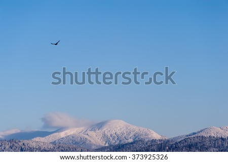 bird flying in the blue sky to the top of the mountain.  natural winter background - stock photo