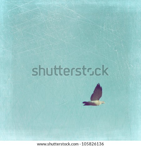 Bird flying in the sky - stock photo