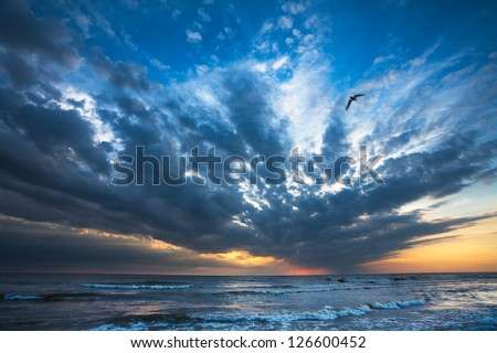 Bird flying new sea shore on sunset. Anapa, Russia
