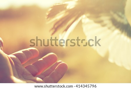 bird flying out of human hand, ecological concept - stock photo