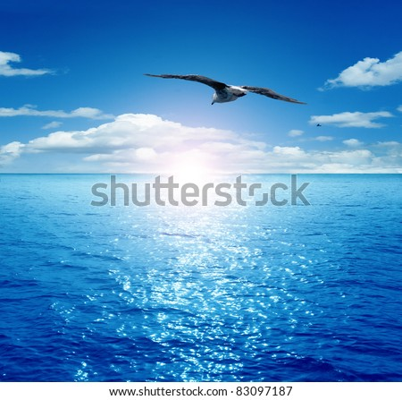 Bird flying past the rising sun. Dawn on the sea. A flying seagull. - stock photo