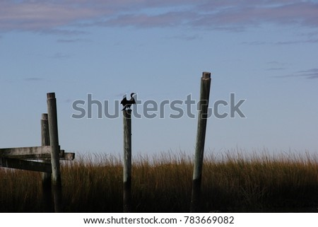 bird flying with marsh background