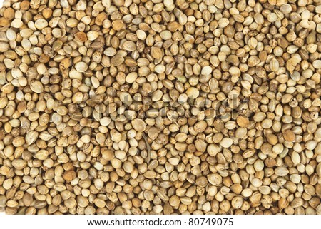 Bird food background texture