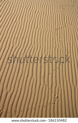 Bird footprints on the surface of the desert