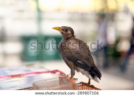 Bird for sale - stock photo