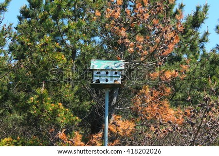 Bird House In The Trees