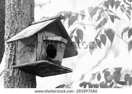 bird house on the tree.black&white. - stock photo