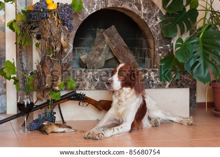 Bird hunting dog lying in front of a fireplace near a shotgun, dead bird and glass of wine, horizontal - stock photo
