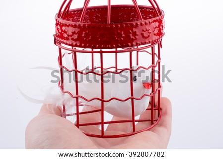 Bird in a birdcage - stock photo