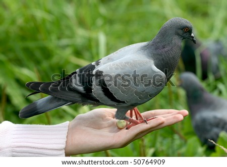 Bird in a hand - stock photo