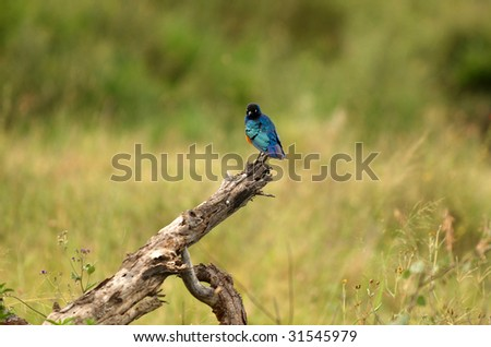 Bird in African national park - stock photo