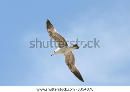 Bird in Flight - stock photo
