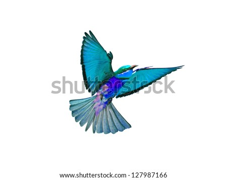 Bird in flight isolated on white background - stock photo