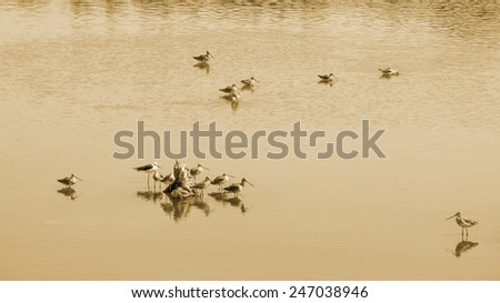 Bird in forest mangrove - stock photo