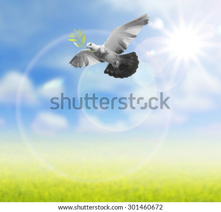 Bird in the air on nature background  , all concept , peace and spirituality - stock photo