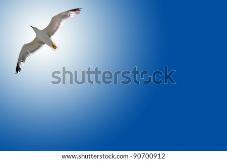 Bird in the air with wings wide open in-front of the sun - stock photo