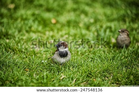 bird in the grass. - stock photo
