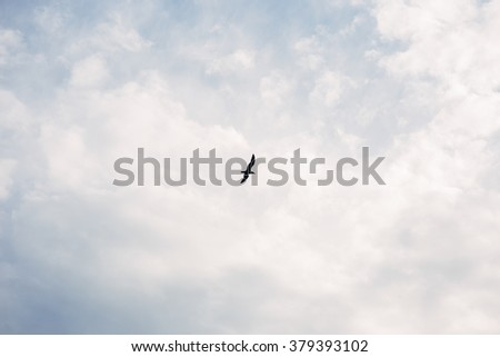 Bird in the sky - stock photo