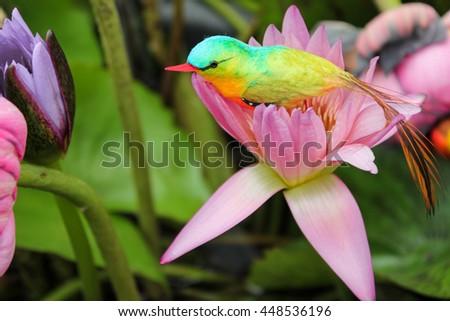 Bird Living On Flowers