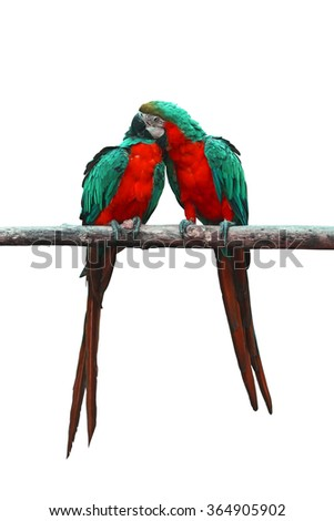 Bird,Multi colored macaw isolated on white background, with clipping path - stock photo